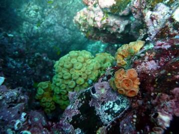I coralli delle isole galapagos scubamonitor blog for Costruttori domestici del nordovest pacifico